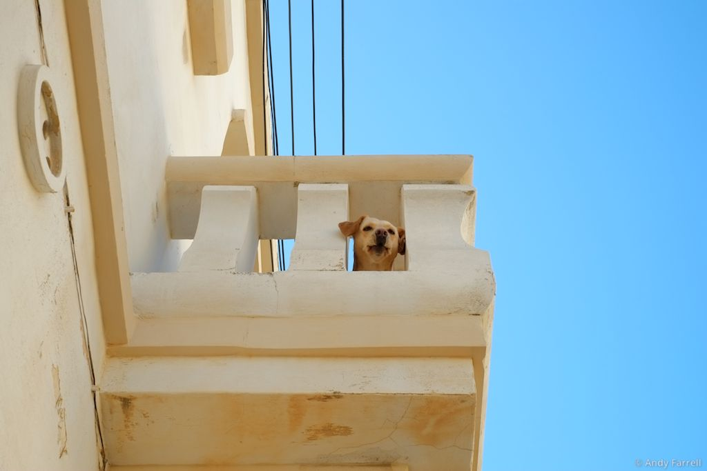 dog looking down from balcony