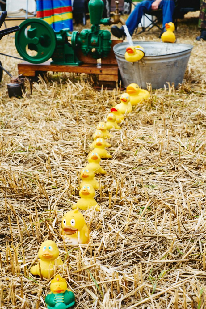 plastic ducks in a row on straw