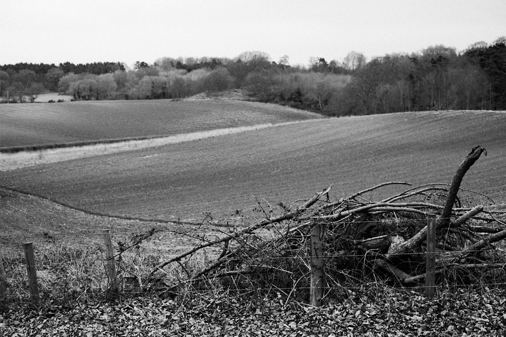 branches and fields