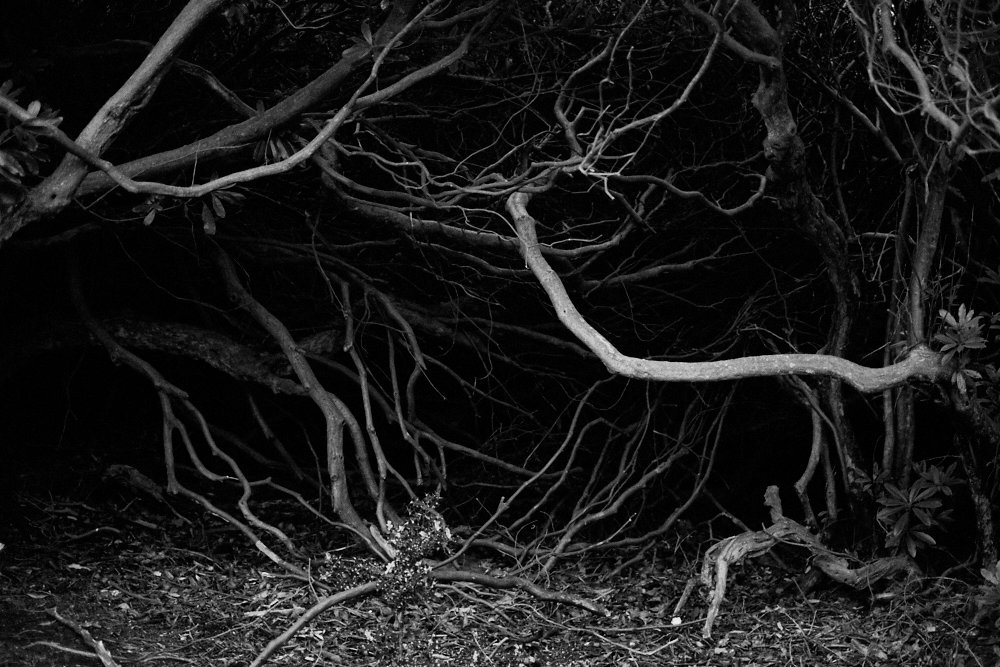 spooky branches