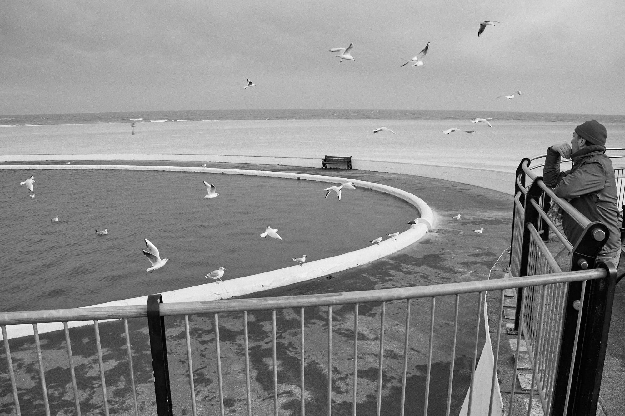 man watching seagulls