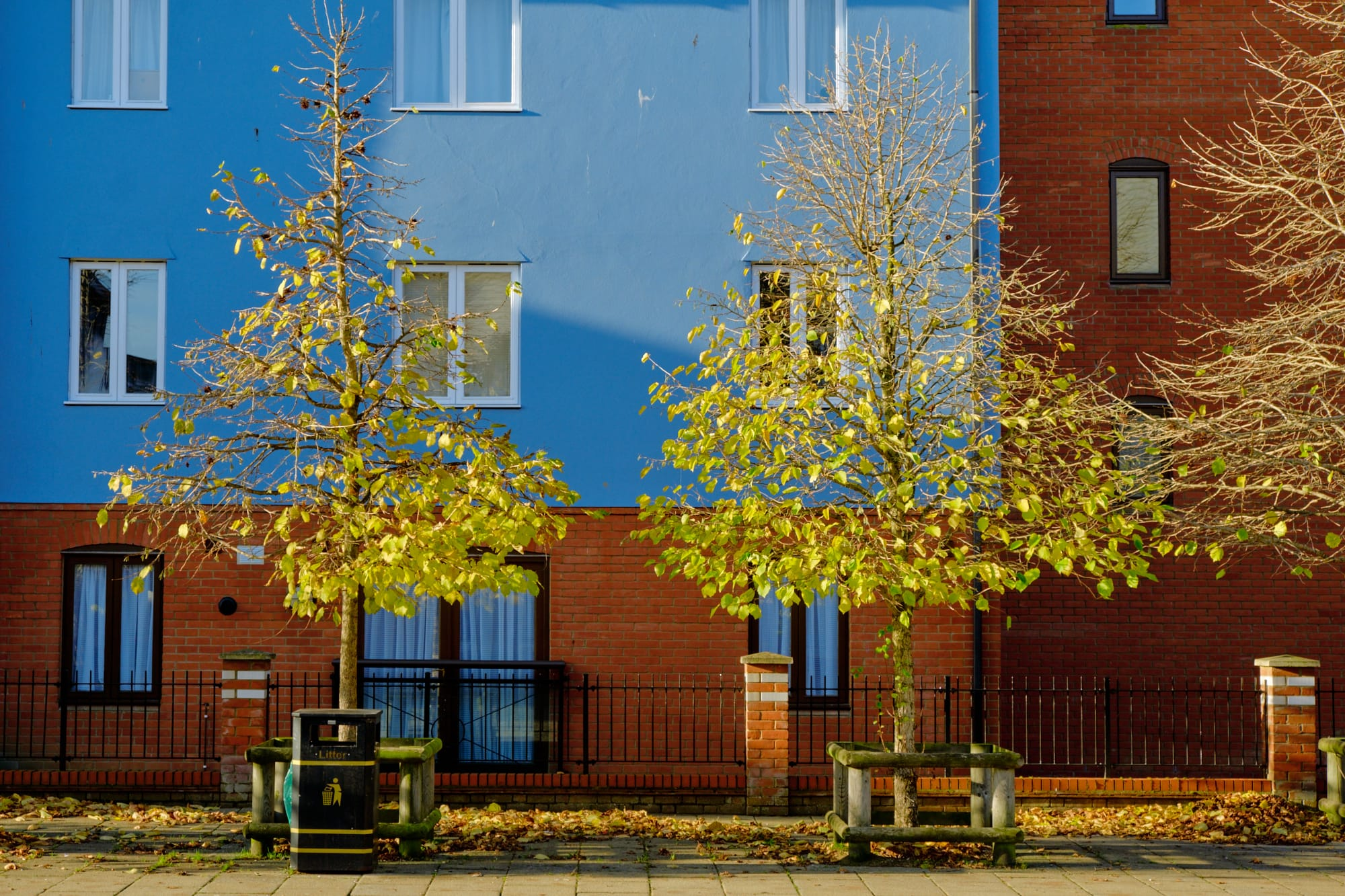 green and yellow trees against blue and red walls