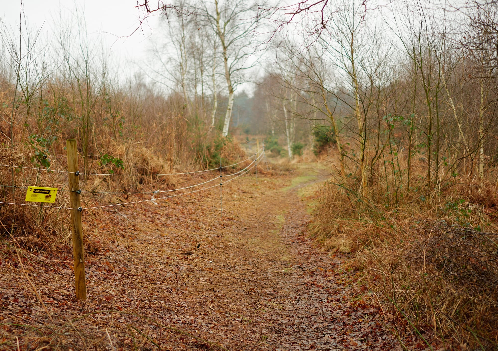 wire fence alongside a forest path