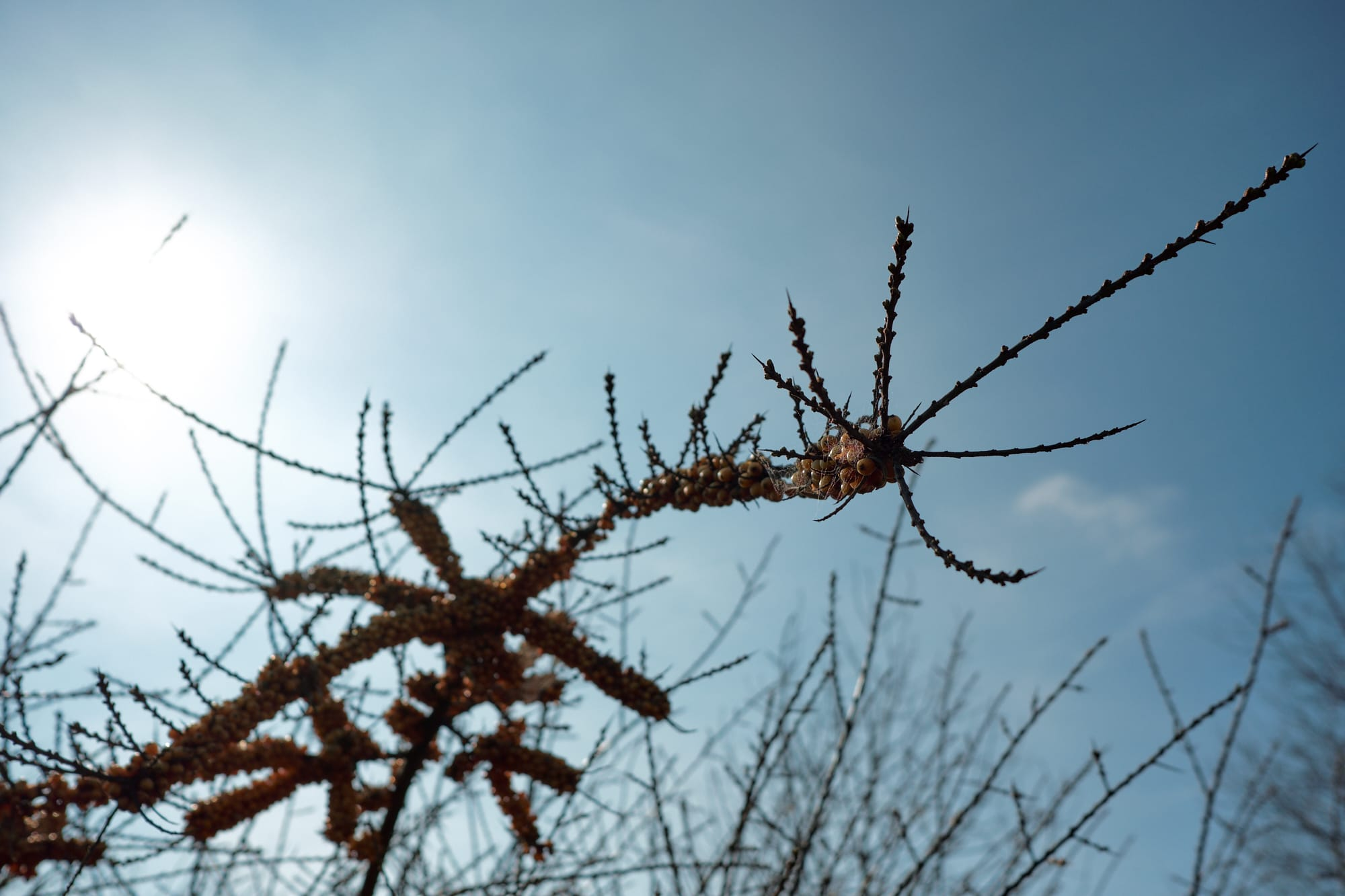 bush branch against the sun and sky