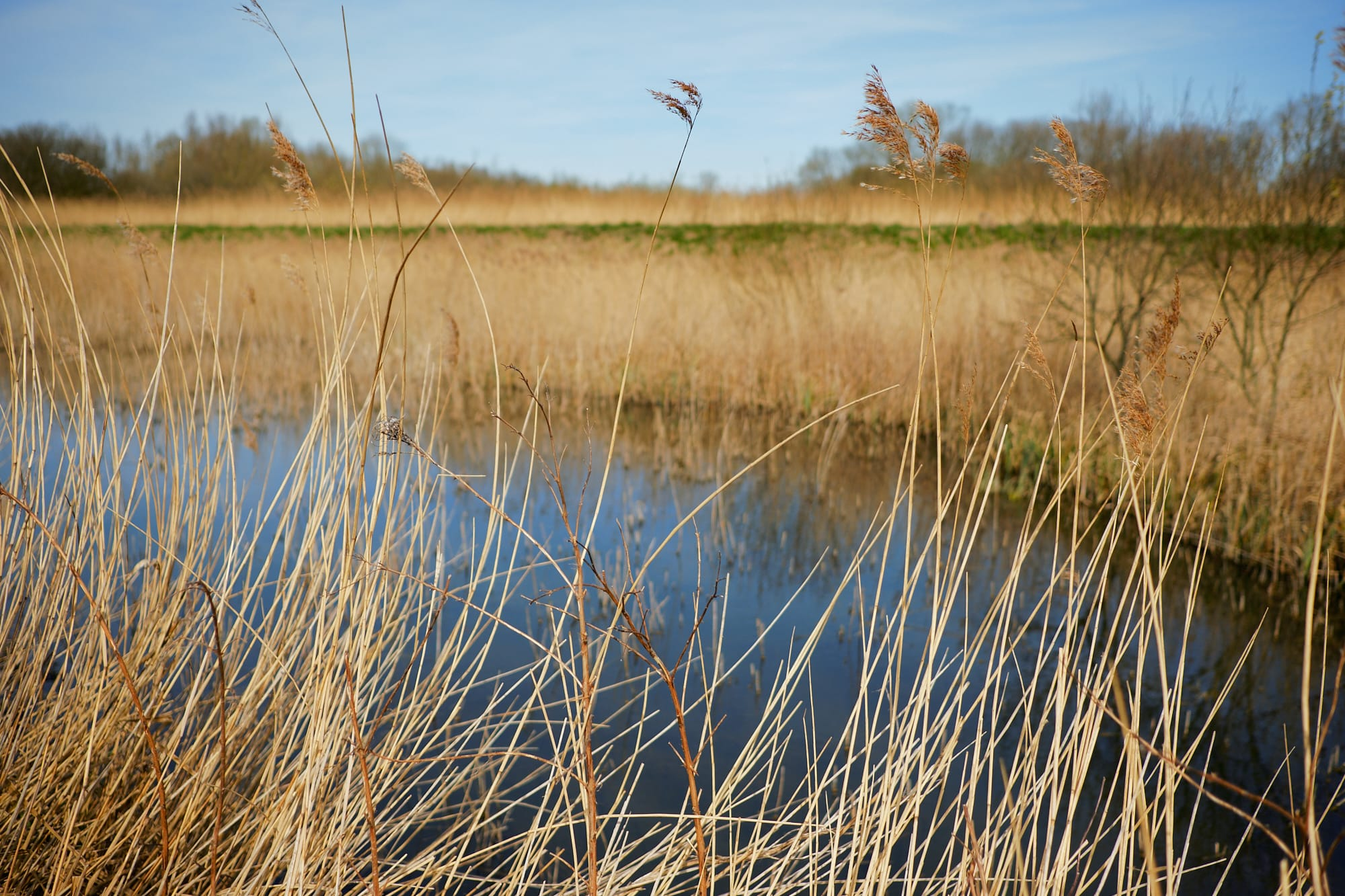 marsh grass against the water