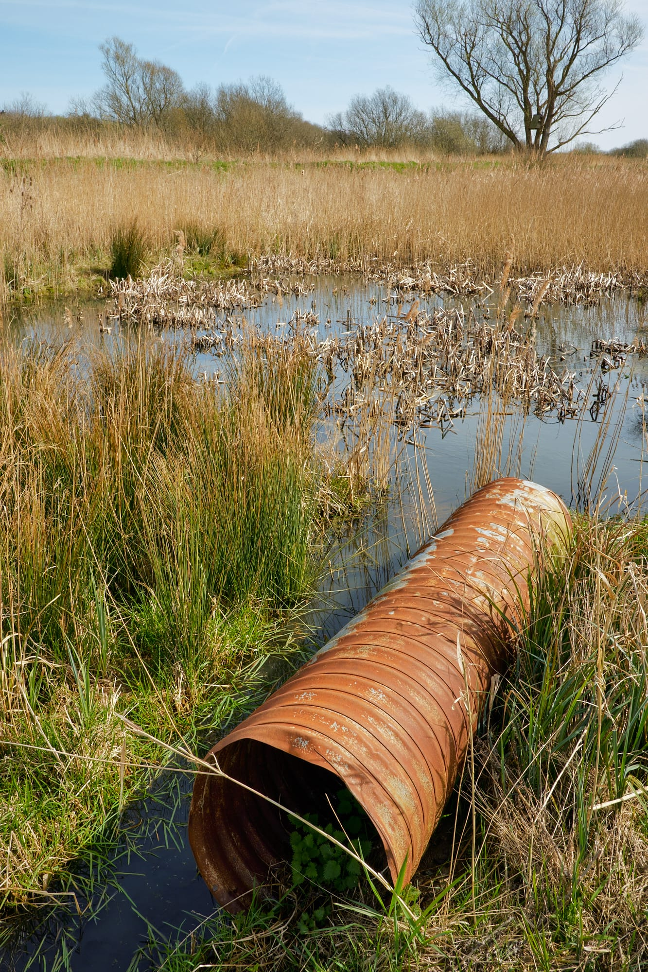 rusty old pipe in the marsh