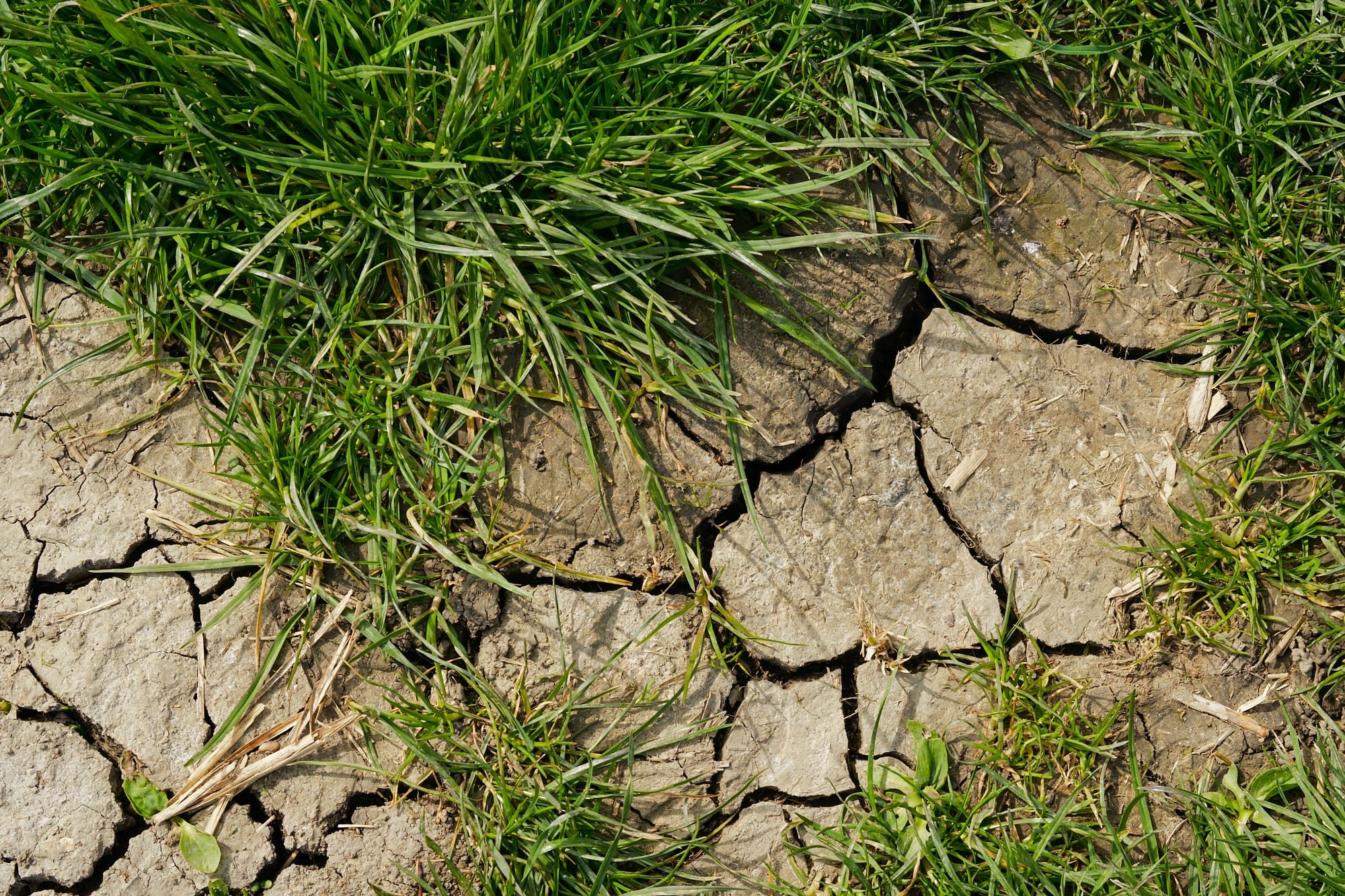 grass and desiccated mud patch