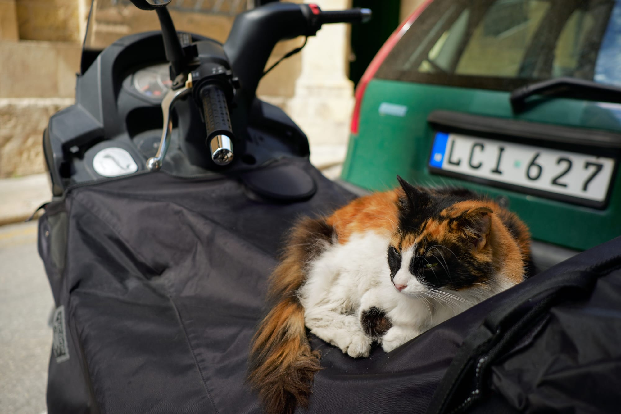 cat on a parked motorbike
