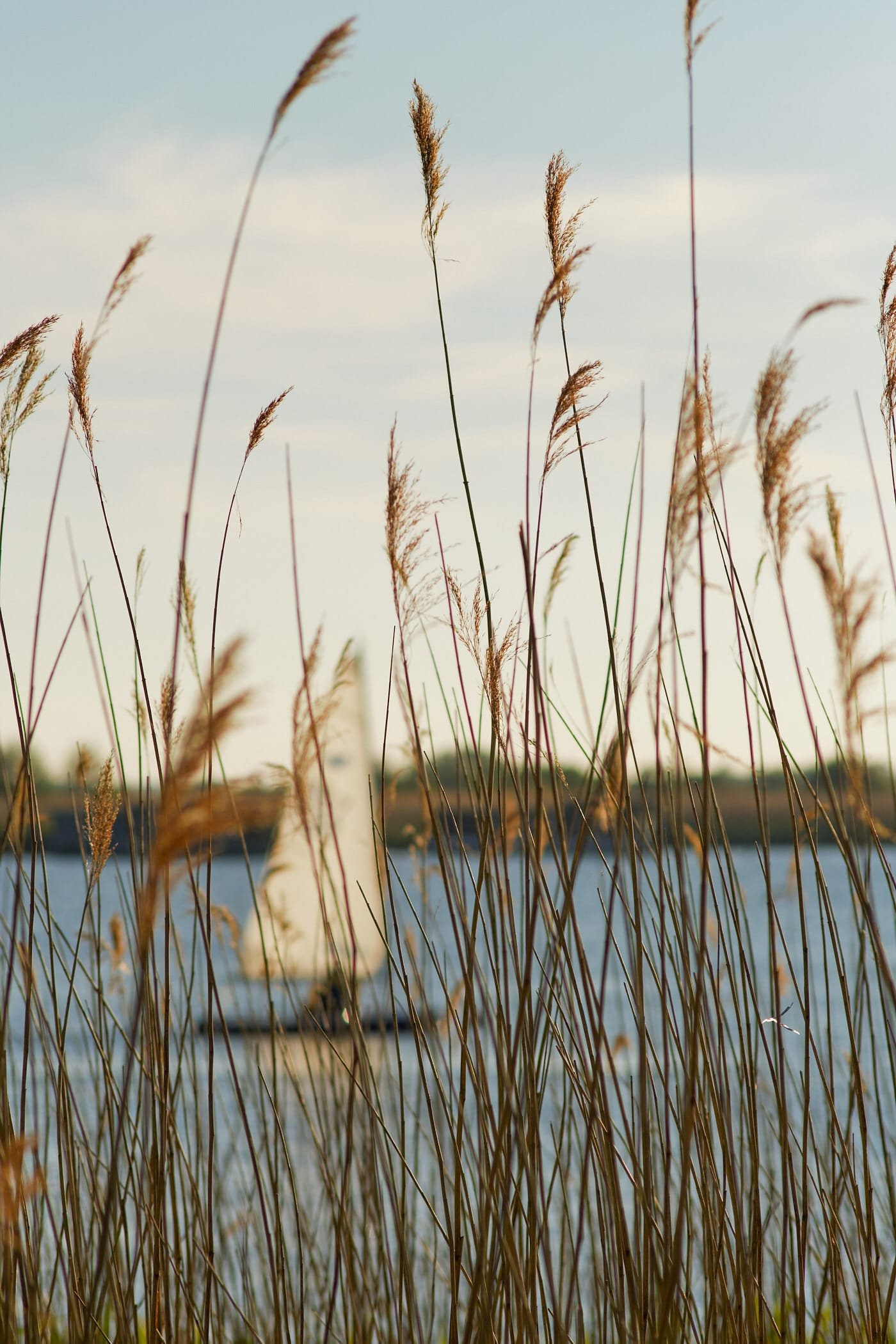 marsh grass with sailing dinghy in the background