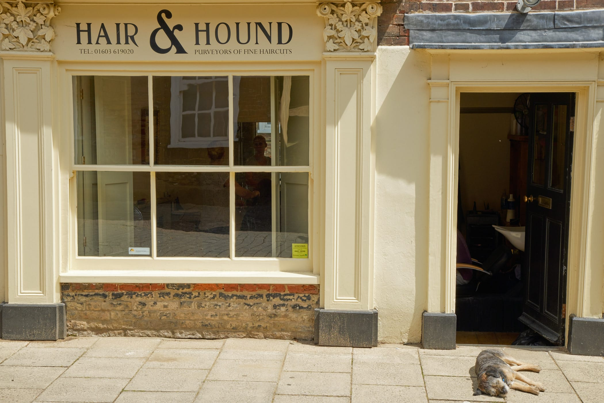 Hair & Hound, with hound
