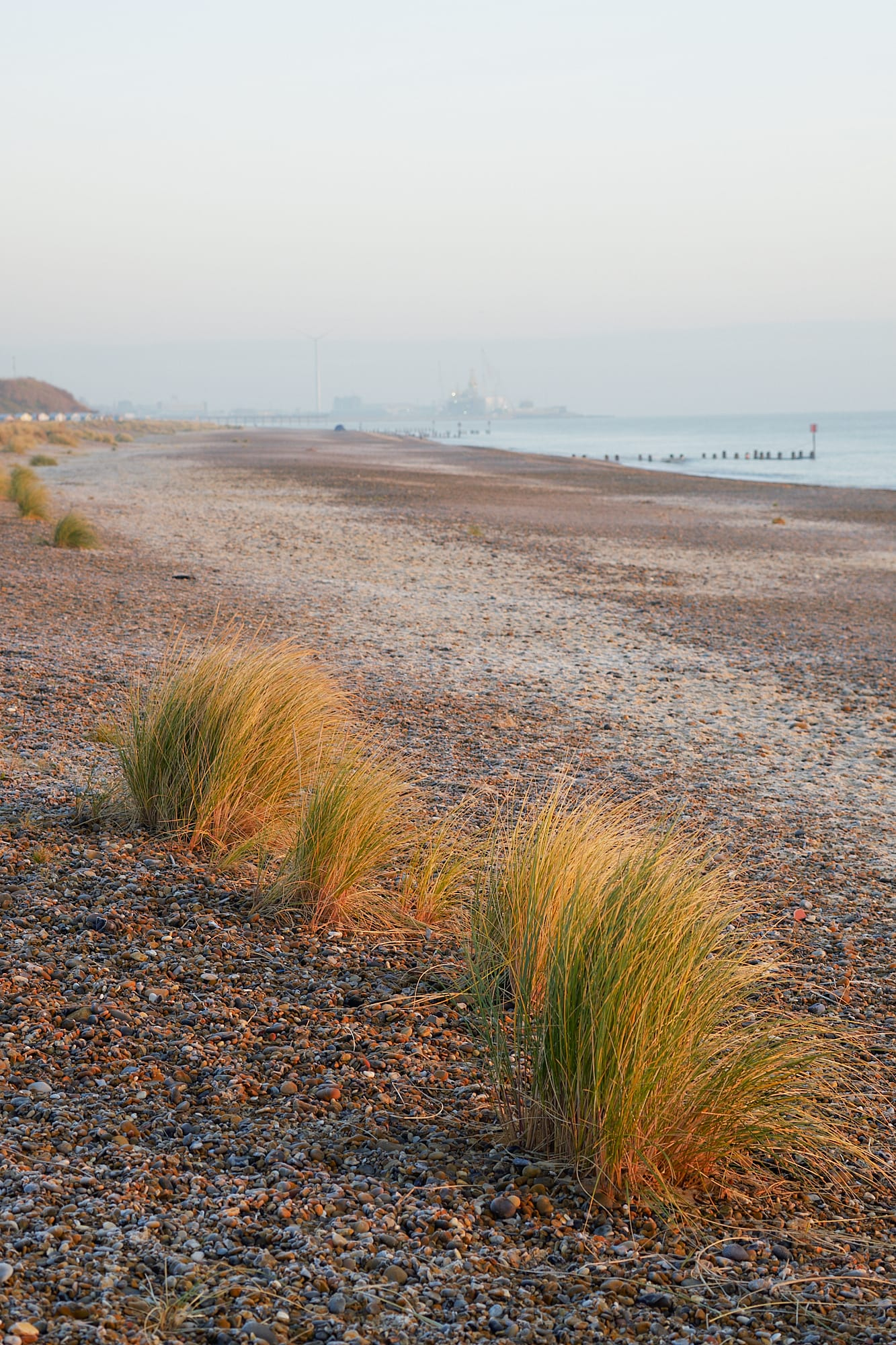 tufts of beach grass at dawn