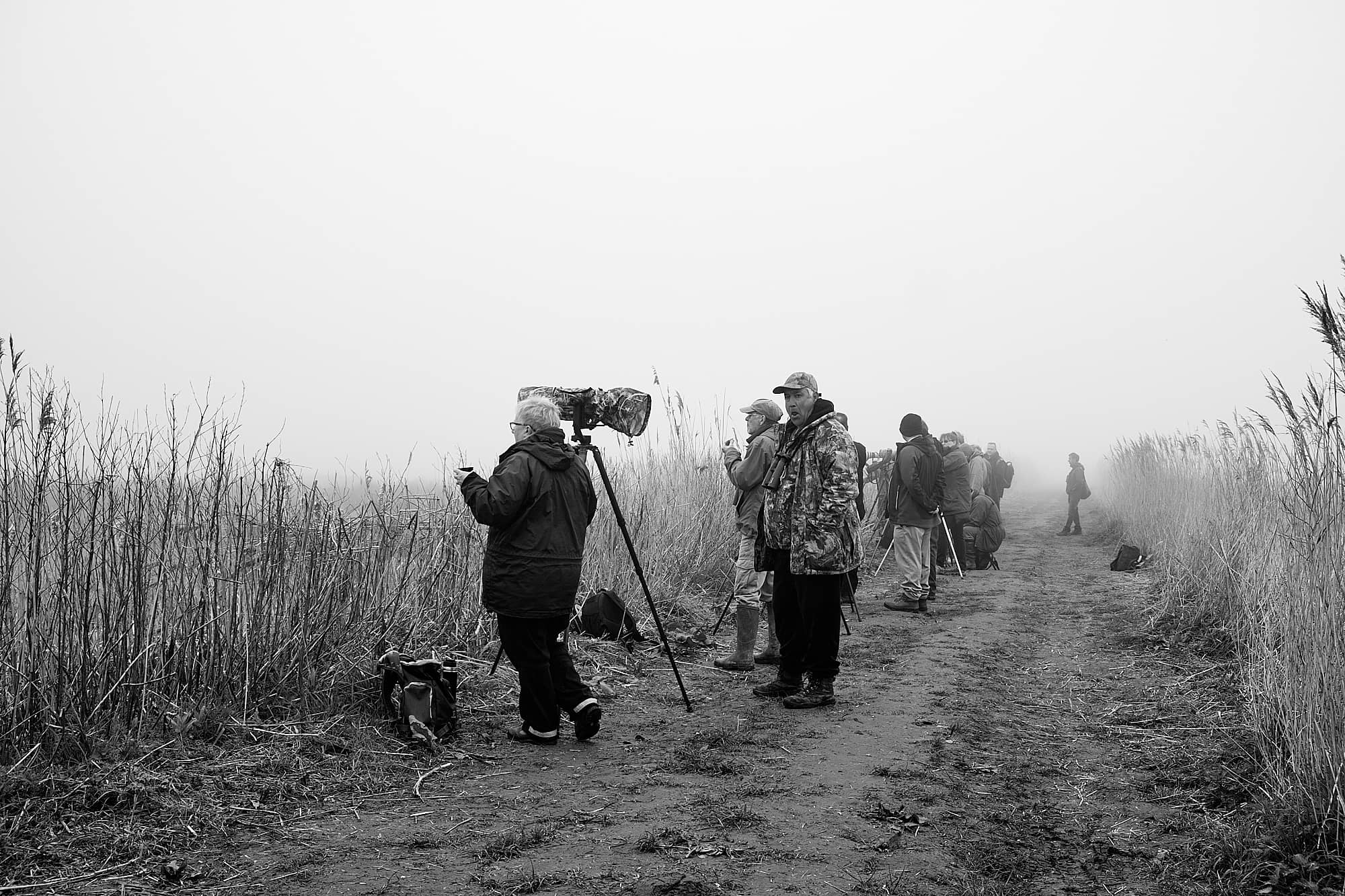 birdwatchers hoping to see an American Bittern