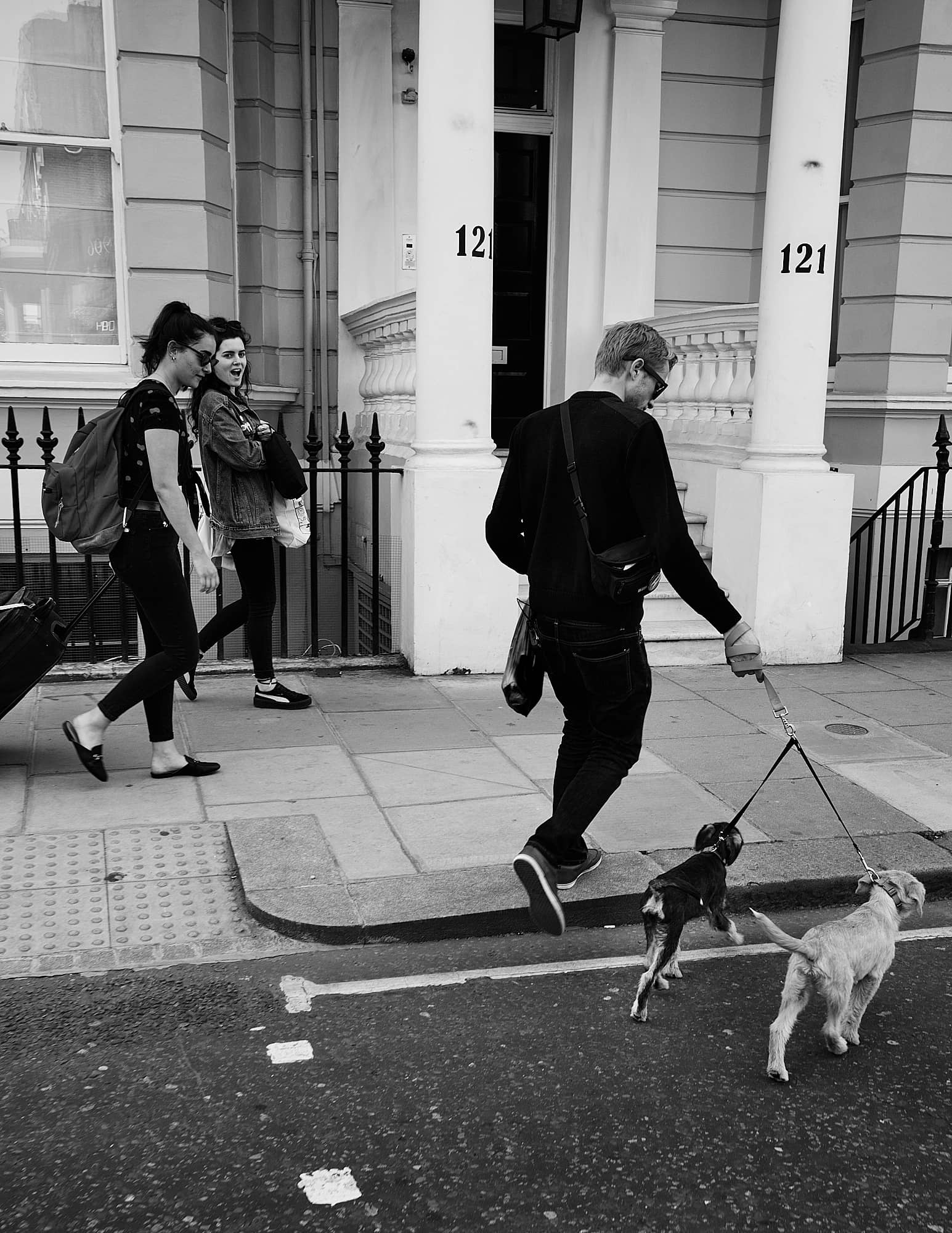man crossing the road with two small dogs
