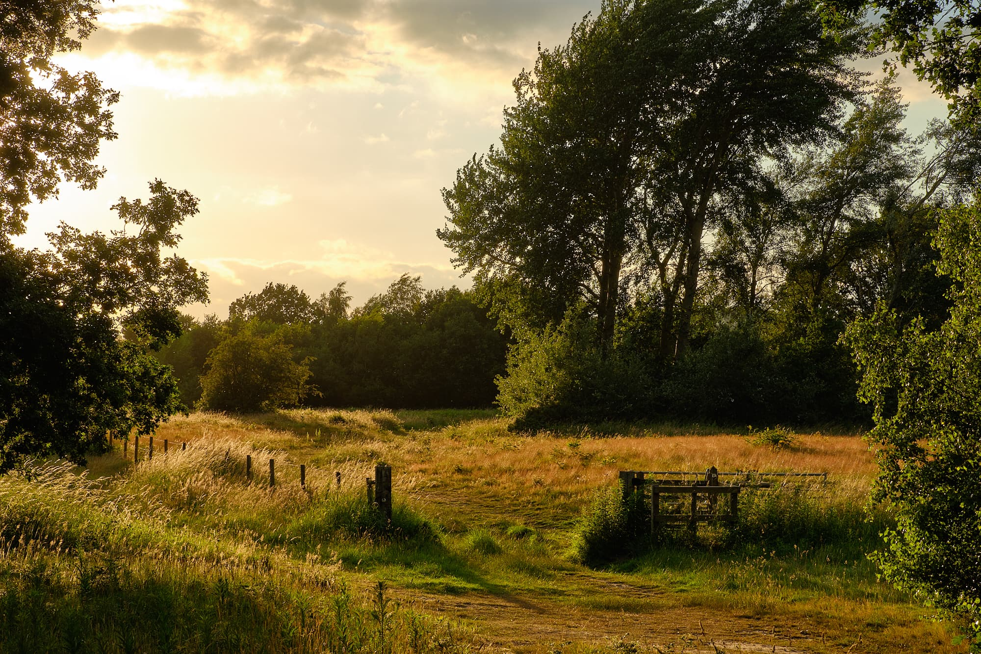 evening at Outney Meadow, Bungay